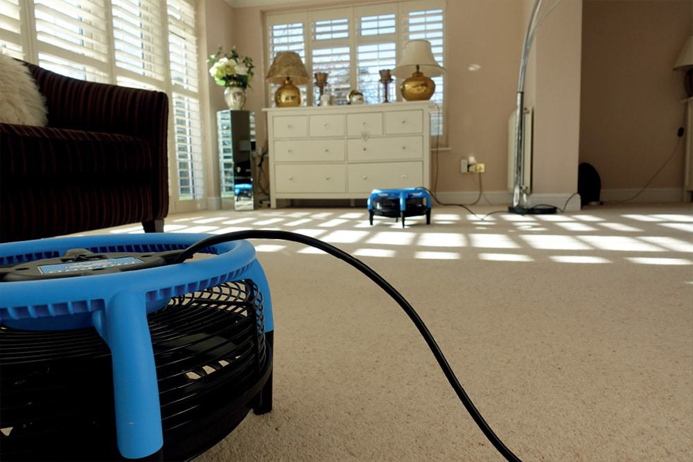 Carpet drying after cleaning